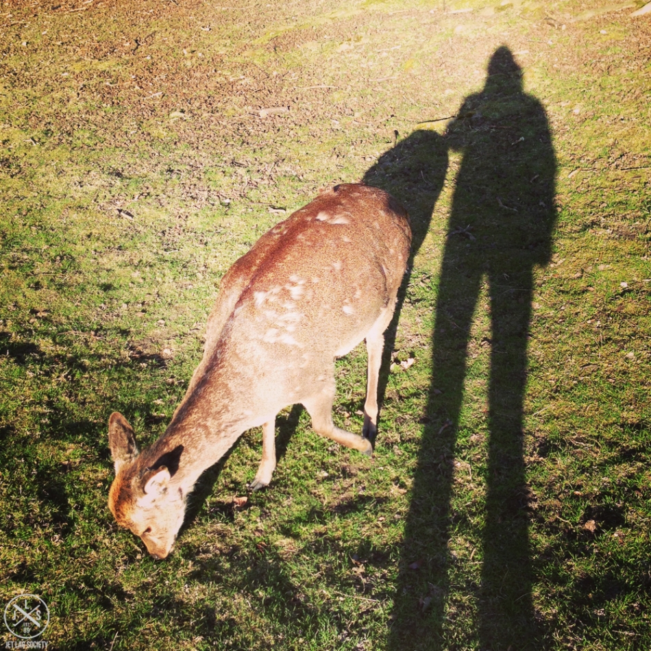 deershadow-jls
